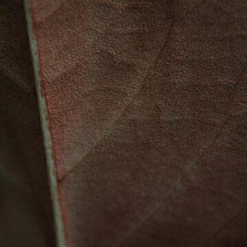 a leaf by filthy-english