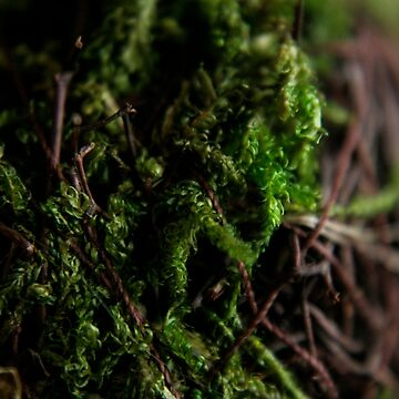 Moss ball 0.2 by filthy-english
