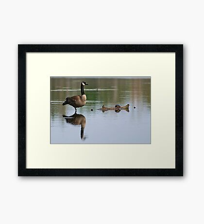 Canada Goose and Turtle - Ottawa, Ontario Framed Print