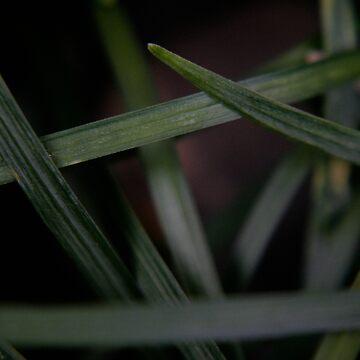 mondo grass by filthy-english