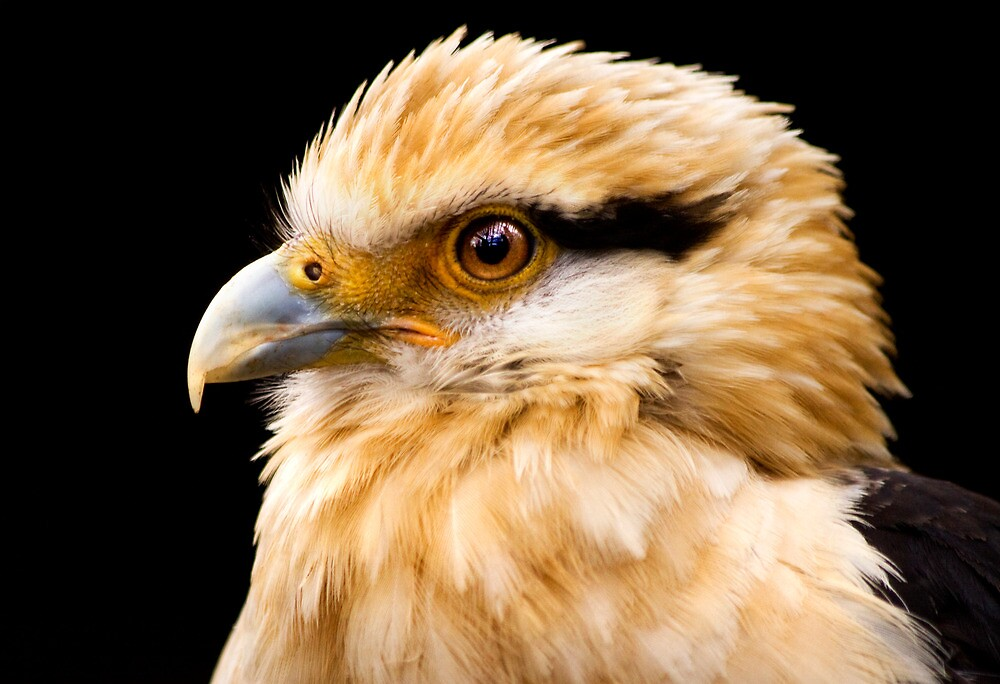 Bird by igotmeacanon