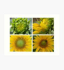 Birth of a Sunflower Art Print