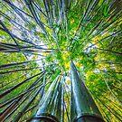Bamboo 02 by MightyGeekMan