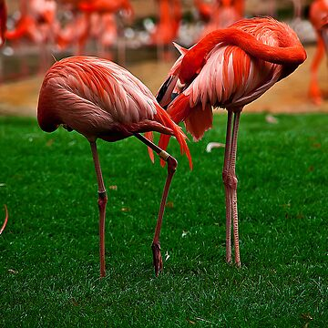 Flamingo Park by mgurdus