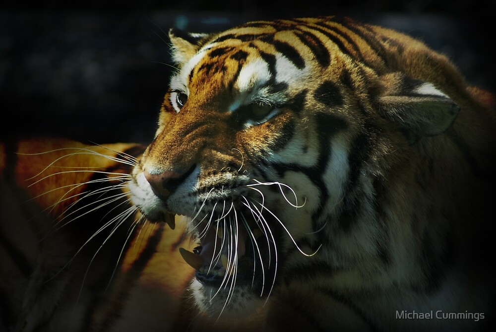 Snarling Tiger  by Michael Cummings