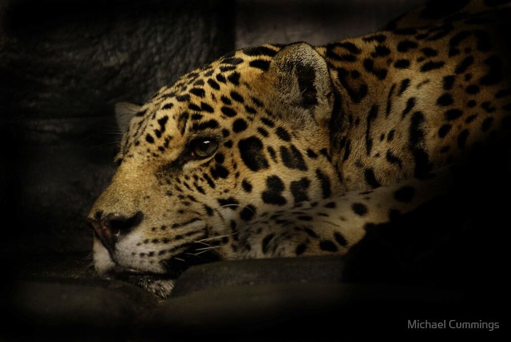 Jaguar  by Michael Cummings