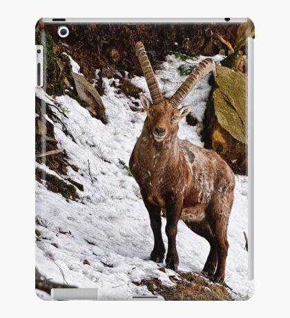 Ibex in Winter iPad Case/Skin