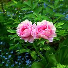 A Beautiful Pair of Peonies by Monica M. Scanlan