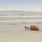 Gulf Shore Shell by RayDevlin