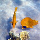 Gorgeous Beauties In The Red Sea Underwater Photography by hurmerinta