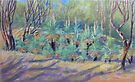 Grass Trees at Cunningham's  Gap Queensland by Virginia McGowan