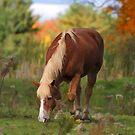 Horse In Fall Pasture by Deborah  Benoit