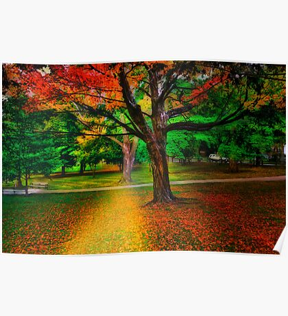 Brookline park at fall Poster