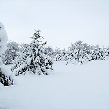 Winter Wonderland by iluvmyragdolls