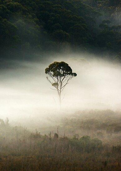 the loner...... by David Murphy