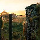 Dawn light by Dean Mullin