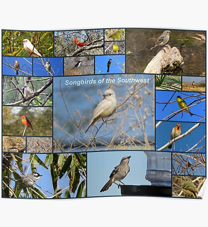 Songbirds of The Southwest ~ Collage Poster