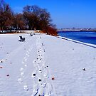 Beautiful Winters Day!! by Stacy Colean