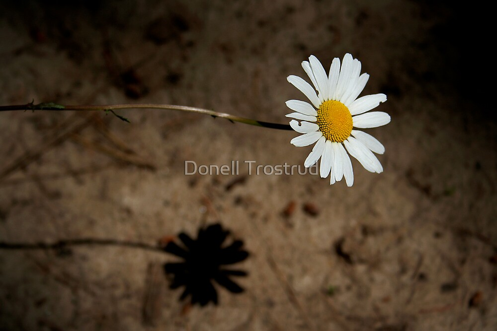 Lazy Daisy Afternoon by Donell Trostrud