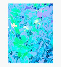 Contemporary Floral, Untitled  by Janai-Ami Photographic Print