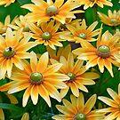 Ich habe einen Garten von Happy gefunden! von autumnwind