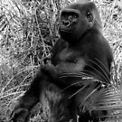 Silver Back Gorilla by maureenclark