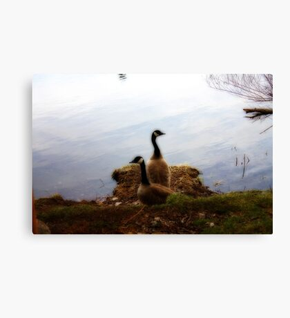 Which Way Do We Go Canvas Print