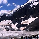 Columbian Icefields by maureenclark