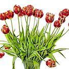 Painted Tulips by Lynne Morris
