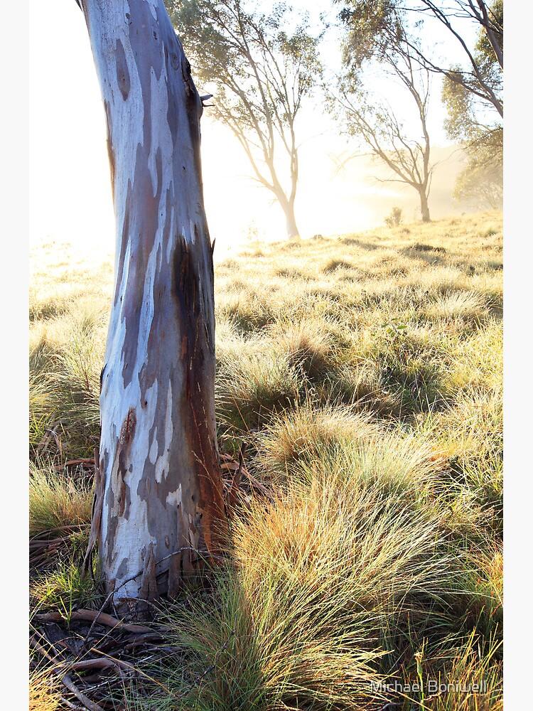 Misty Gumtree, Kosciusko National Park, Australia by Chockstone