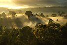 """Goodmorning Sunshine"" by debsphotos"