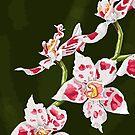 «Orquidea» de RebecaZum