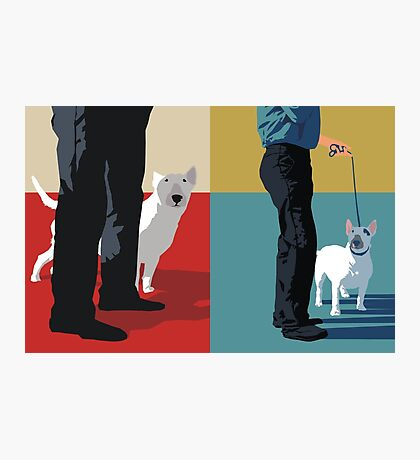 Bull terriers Photographic Print