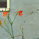 Wall and Flowers by Digby