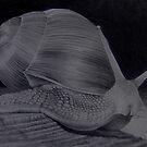 Snail by Bridie Flanagan