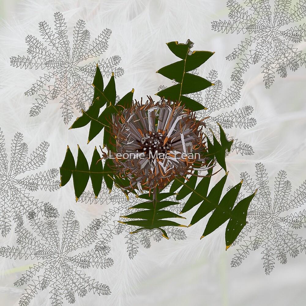 Cream Banksia Drawing, native flora, West Australian wildflower. by Leonie Mac Lean