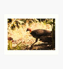 Brush turkey Art Print