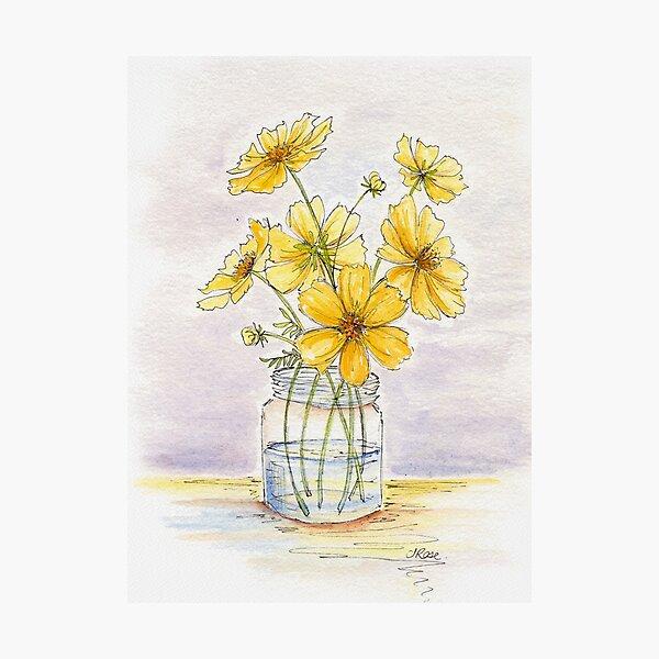Yellow Cosmos, Still Life Photographic Print