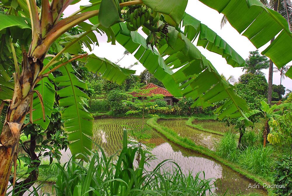 A look through the banana tree by Adri  Padmos