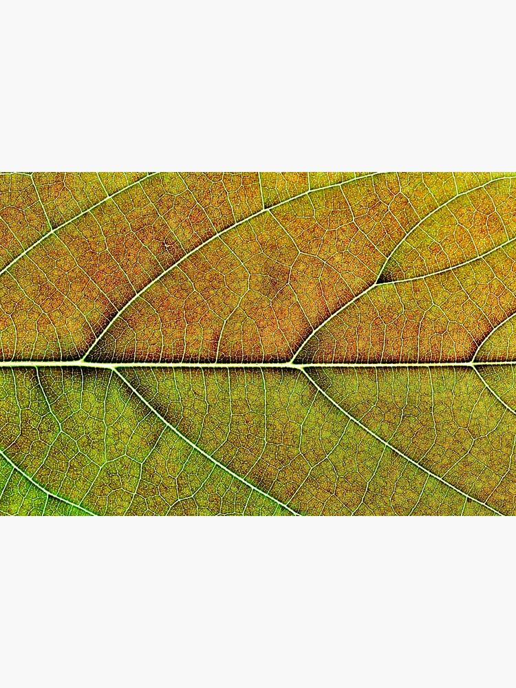 Avocado leaf structure by fardad