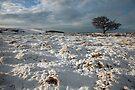 A Dales Winter Landscape by SteveMG