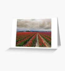 Tulip Field Greeting Card