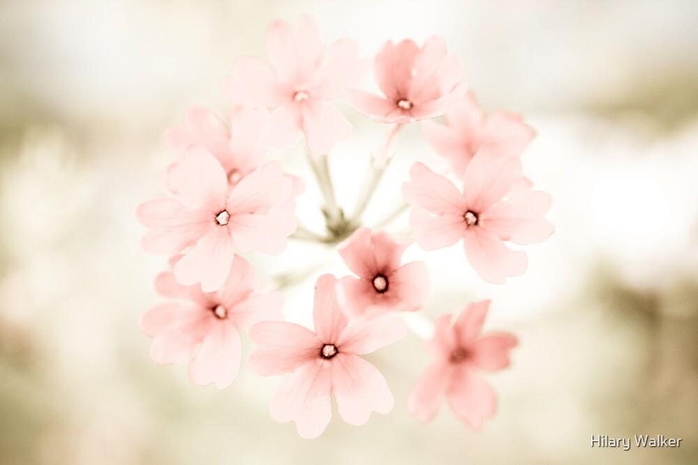 Pretty in Pink by Hilary Walker