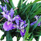 Artsy Iris by KateMcCSeattle
