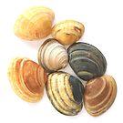 Sea Shells I by Kathie Nichols
