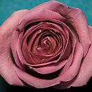 Altered colour Rose macro by Derik128
