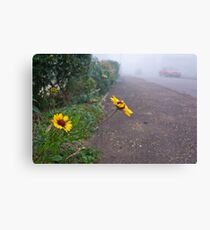 A touch of colour on a misty morning Canvas Print