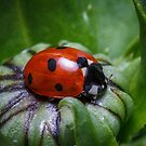 Ladybird sleeping inside a flower bud by Derik128