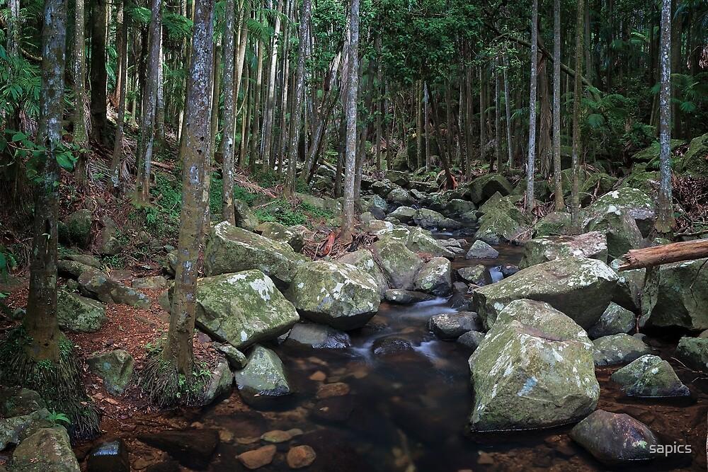 Rainforest Beauty by Robert Armitage