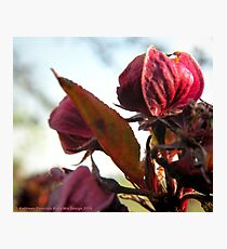 Spring Welcome Photographic Print